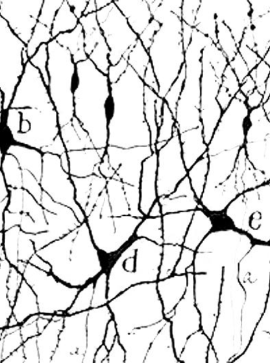 01-Neuronas_940x540